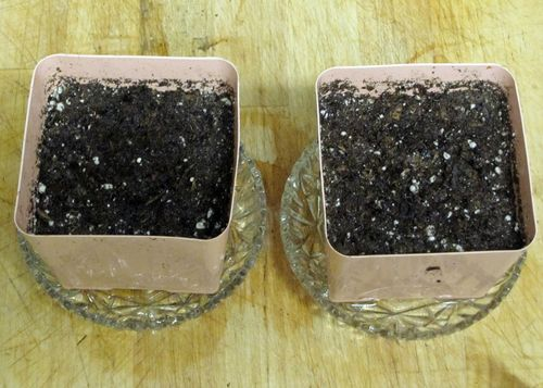 Pots with potting soil and peat moss mix for planting seeds